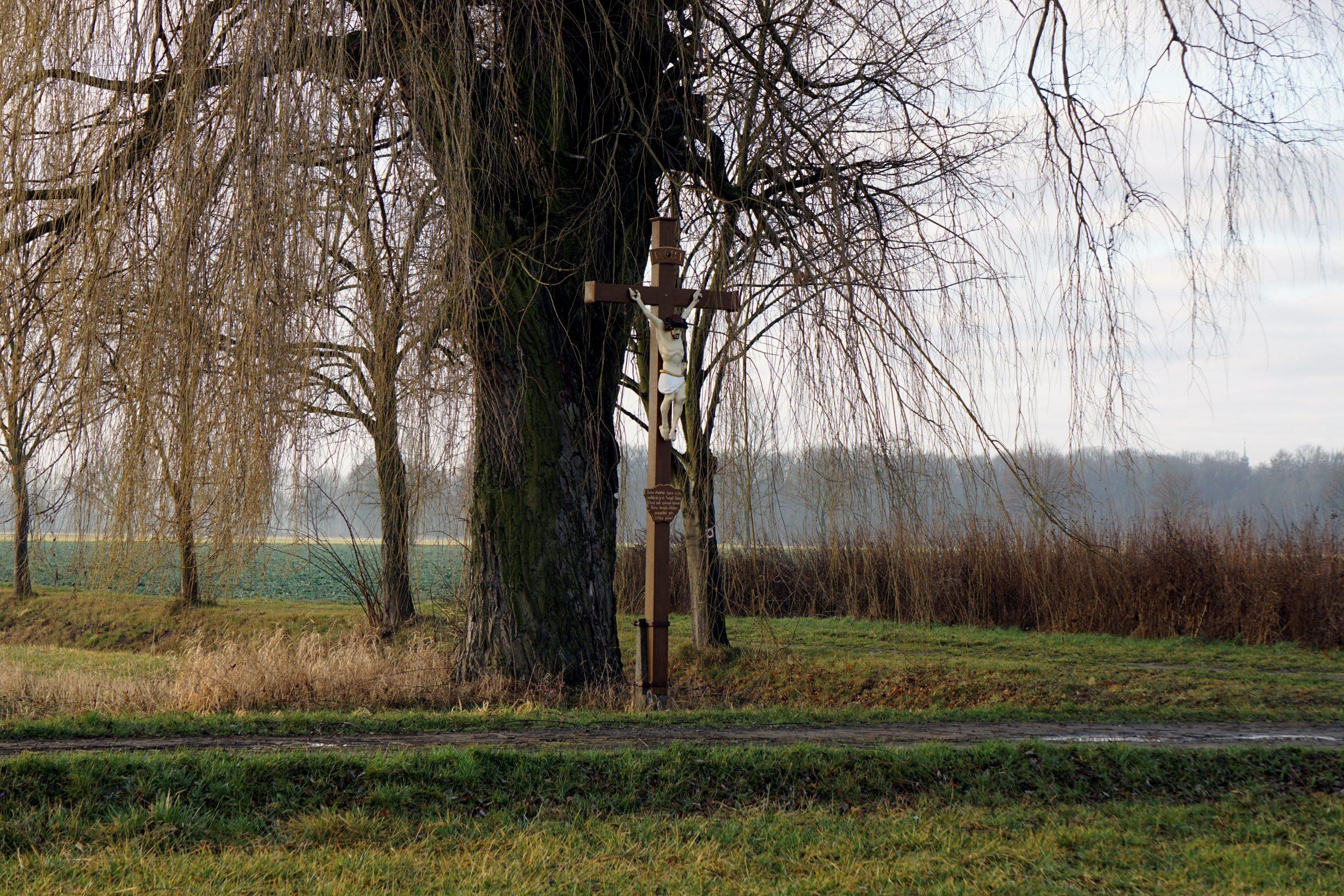 Christenkreuz aus Holz im Freien neben einem Baum auf einem Landweg zwischen Feldern.